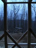 Windows to the wood